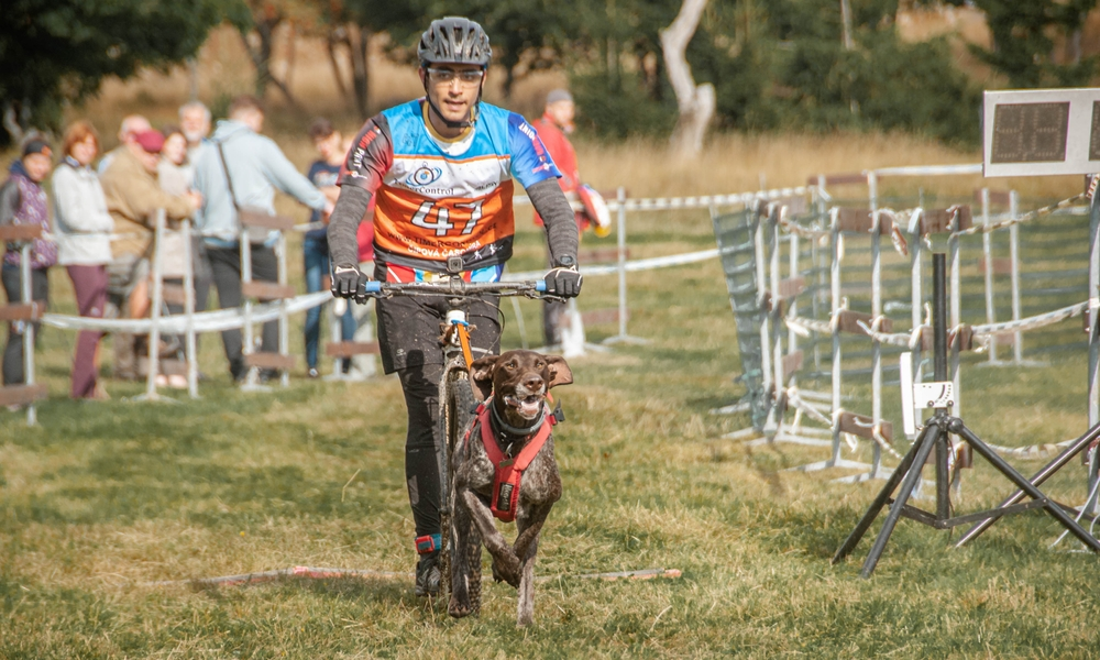 5 tips to prevent your dog from slowing down before the finish line