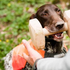 Hunting with dogs: Discipline, obedience and teamwork