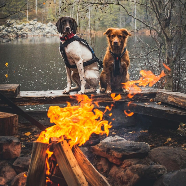 Relaxed Wednesday afternoon with the dogs 🔥⁠ 📷 @frostycloudberry⁠ ⁠ ⁠ ⁠ #nonstopdogwear #nonstopdogwearfreemotionharness #releaseyourdogspotential  #dogs #puppy #cute #dogstagram #instadog #pup #photooftheday #animal #camping #nonstopdogwearftrd