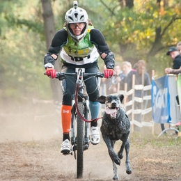 How to prepare for a bikejoring competition
