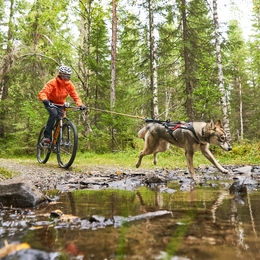 What is bikejoring?