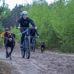 If you want to be good at canicross, train bikejoring too!