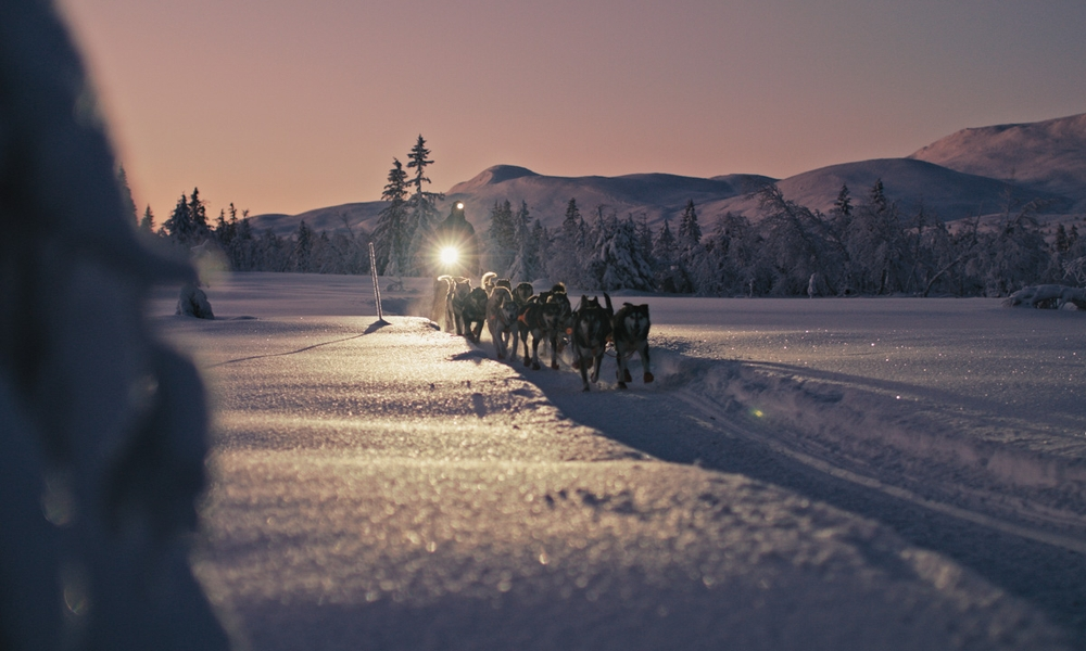 Bringing dog mushing to a worldwide audience