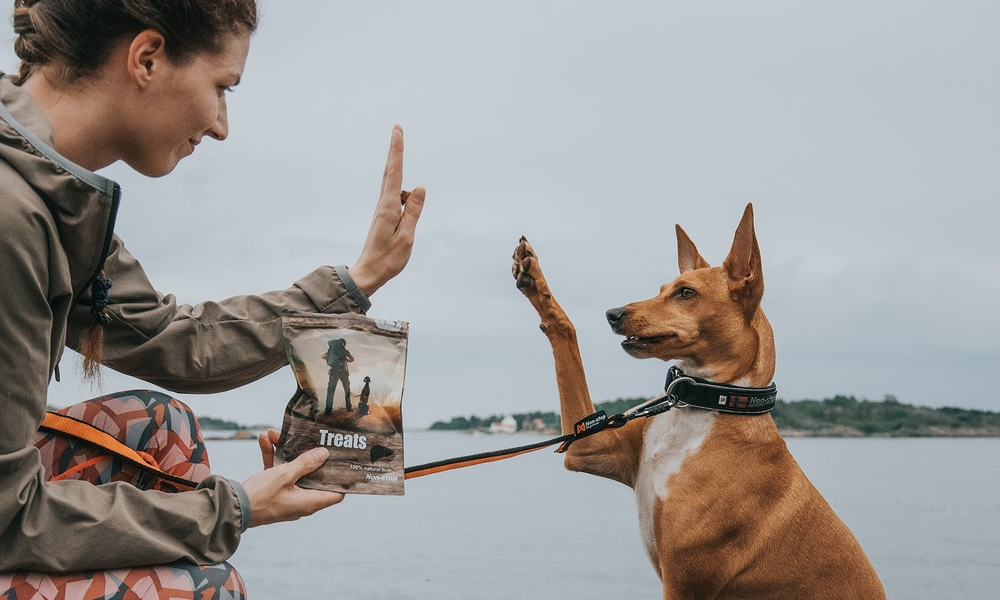 How tricks can help build a stronger relationship with your dog and improve learning skills