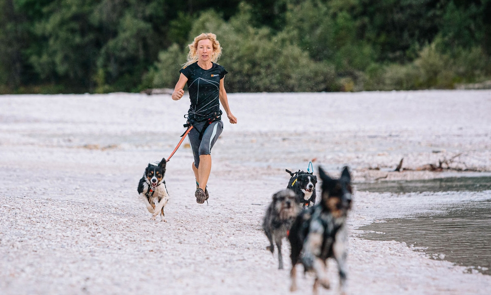How resistance training can benefit your dog