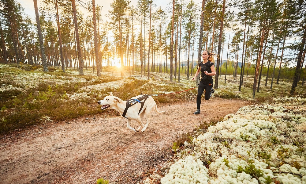 Gifts for running with dogs