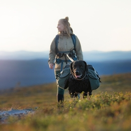 Best tips for backpacking with a dog