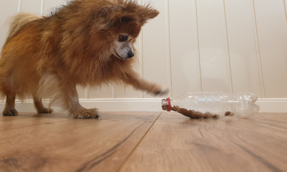 7 homemade games that stimulate your dog mentally