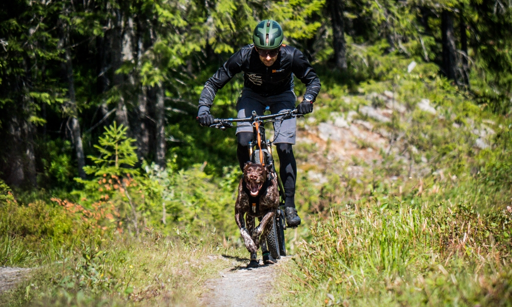 Safety tips for biking with dogs