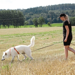 5 tasks to enrich your dog's everyday walks