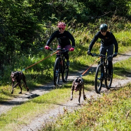 Overtaking other dogs in training and in competitions