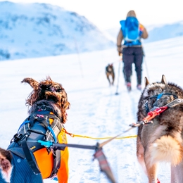 Gifts for skiing with dogs