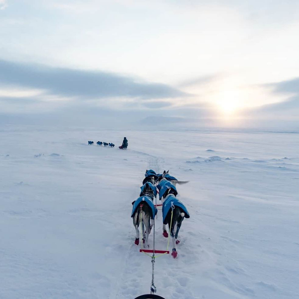 Mushing is a sport that is pushing the musher, the dogs, and the equipment to the limit. The ultimate test. It is both mentally and physically demanding. Hours on the sled under extreme conditions are not for anyone, but it is so rewarding for those that can stand it.  #mushing #nonstopdogwear #nonstopdogwearftrd #nonstopdogwearblestjacket #winter #cold #husky