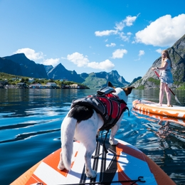 SUP with a dog? This is how you can get started!