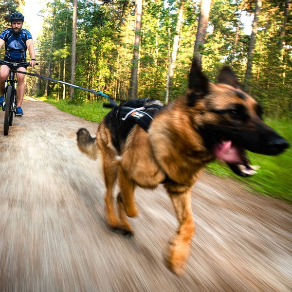 Are you ready for some biking? 🐕---🚲 ⁠ #nonstopdogwear #bikeantenna #freemotionharness #touringbungee #releaseyourdogspotential #nonstopdogwearftrd